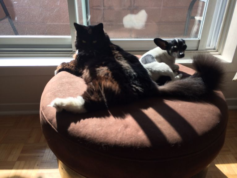 They looove the morning sun :)