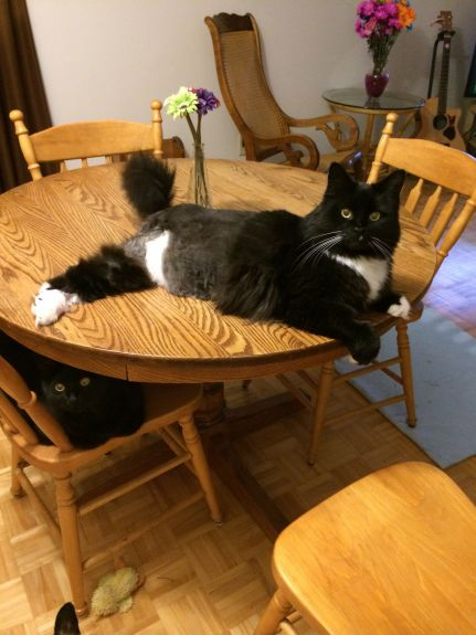 Apparently it's no problem getting on  the dining room table - LOL! :)
